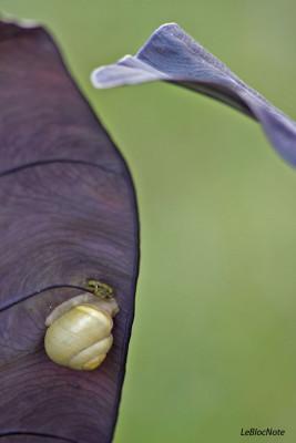 Un escargot sur une feuille