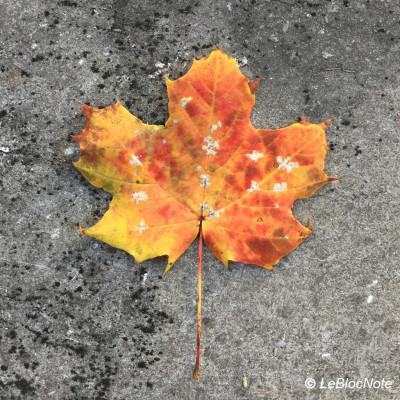 Feuille d'arbre colorée sur une surface en pierreun