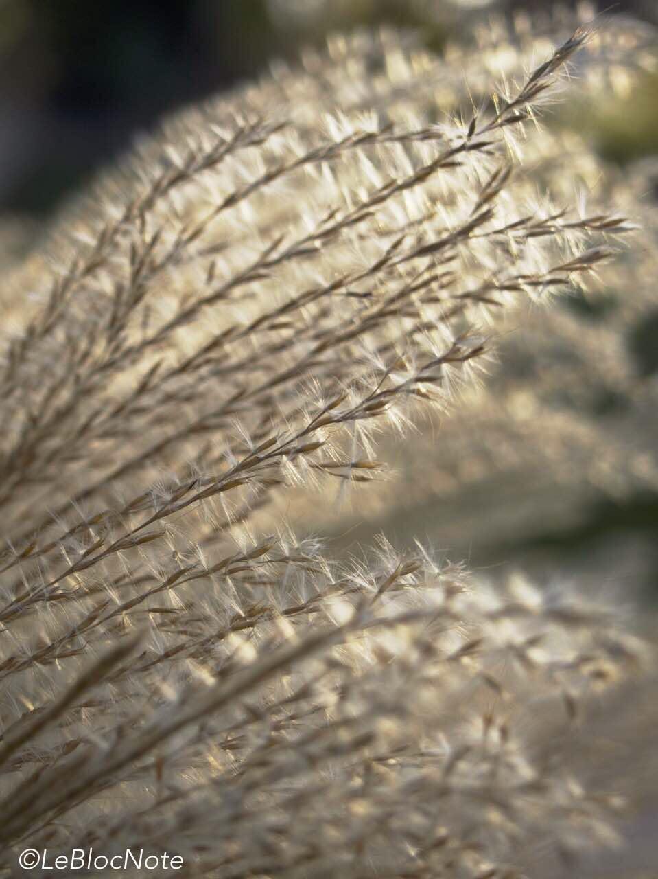 herbes dans la lumière