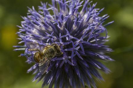 Insecte sur une fleur