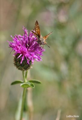 Papillon sur une fleur