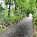 Chemin pavé entre des arbres