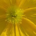 Détail d'une fleur