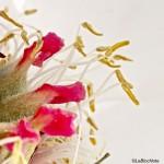 Détails du centre d'une fleur